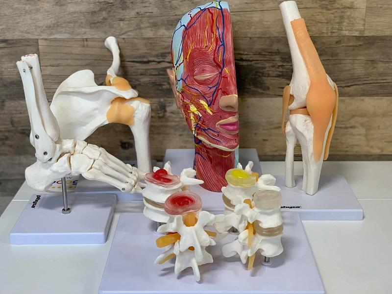 Nowe modele anatomiczne doedukacji pacjenta